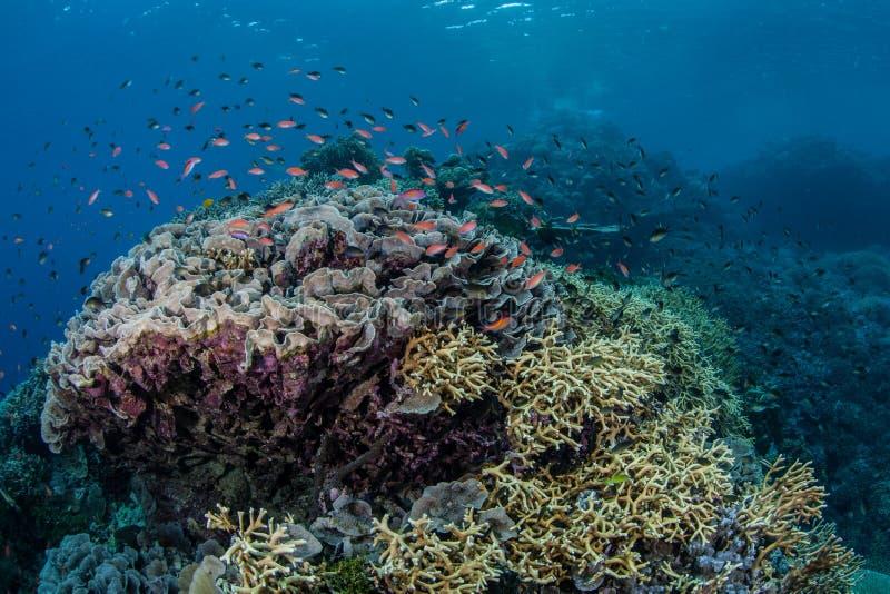 Kleurrijke Coral Reef 1 royalty-vrije stock afbeelding