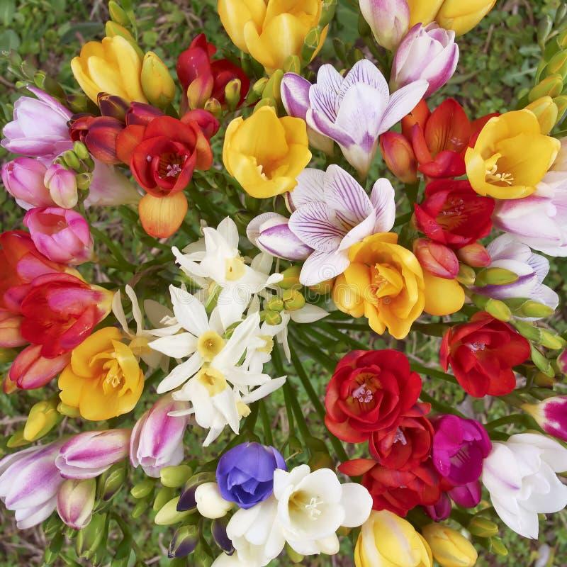 Kleurrijke de bos hoogste mening van fresiabloemen, natuurlijke achtergrond royalty-vrije stock foto