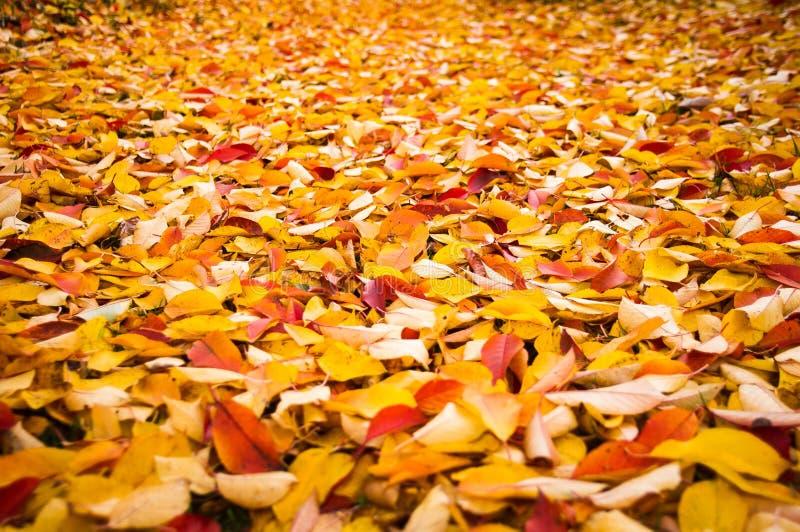 Kleurrijke de herfstachtergrond - stock foto's
