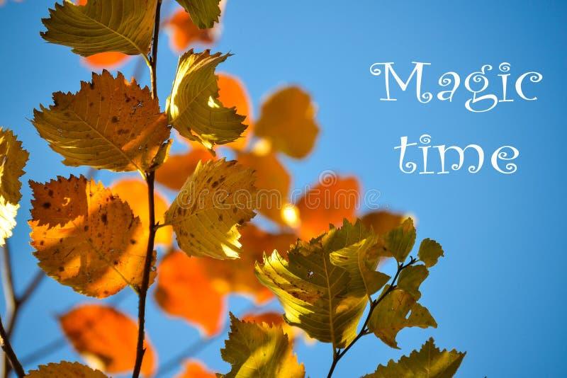 Kleurrijke de herfstachtergrond Rode de herfstbladeren tegen de blauwe hemel Plaats voor de inschrijving, Magische tijd stock foto's