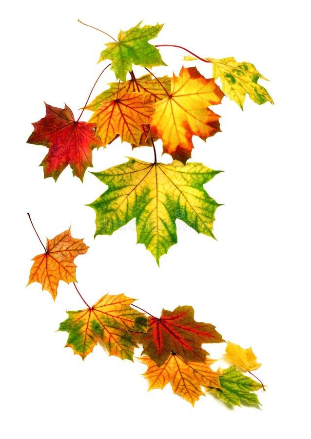 Kleurrijke de herfstbladeren die neer vallen royalty-vrije stock afbeelding