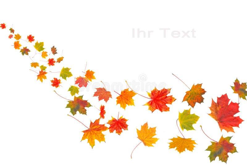 Kleurrijke de herfstbladeren op wit royalty-vrije stock fotografie
