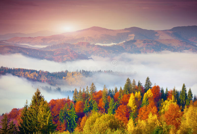 Kleurrijke de herfstochtend in de Karpatische bergen Sokilsky ri royalty-vrije stock foto's