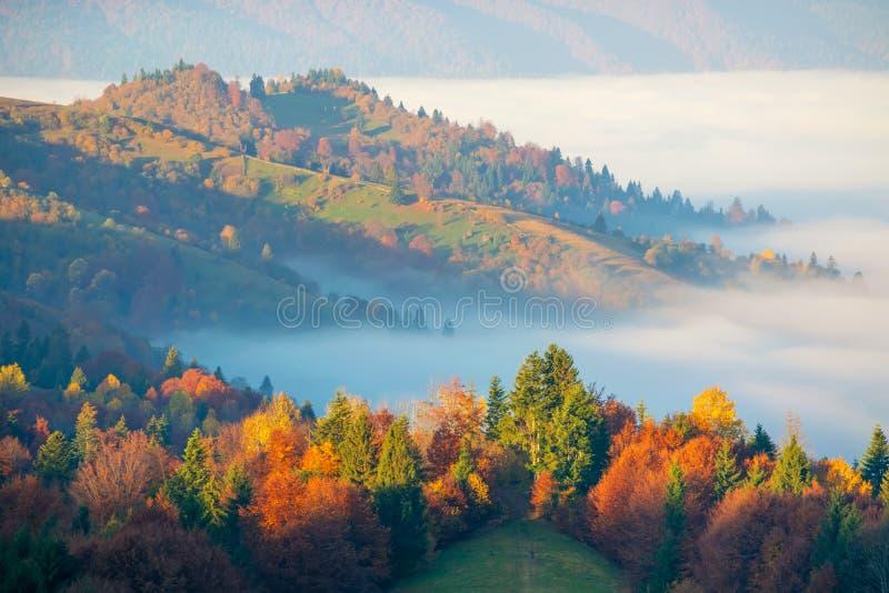 Kleurrijke de herfstochtend in de Karpatische bergen royalty-vrije stock afbeeldingen