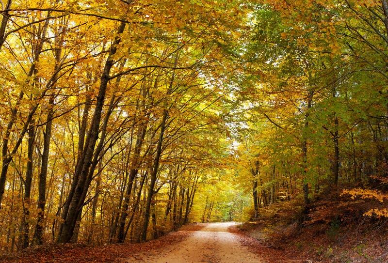 Kleurrijke de herfstweg royalty-vrije stock foto