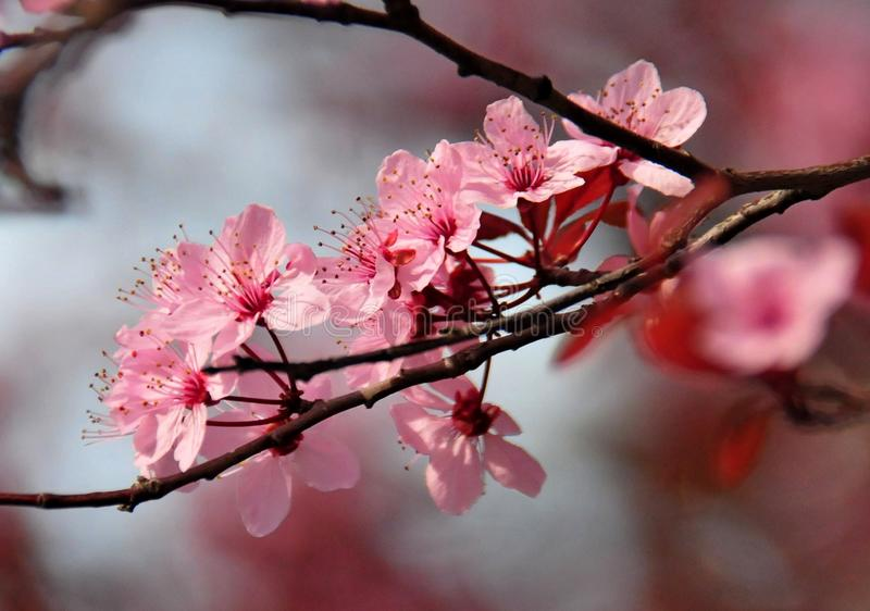 Kleurrijke de lentebloem in Hongarije stock afbeeldingen