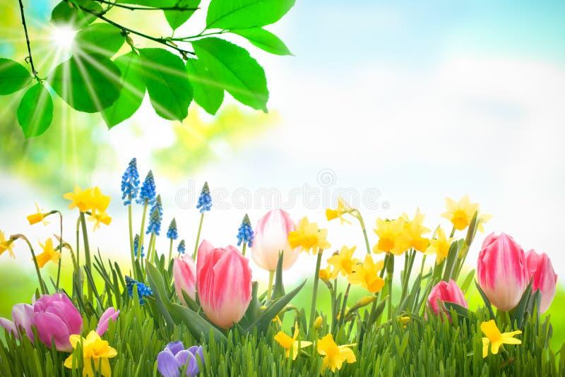 Kleurrijke de lentebloemen stock foto's