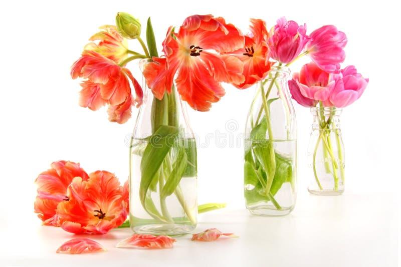 Kleurrijke de lentetulpen in oude melkflessen stock foto