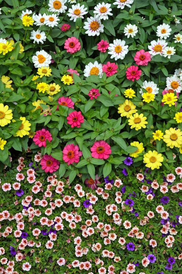 Kleurrijke de zomerbloemen royalty-vrije stock afbeeldingen
