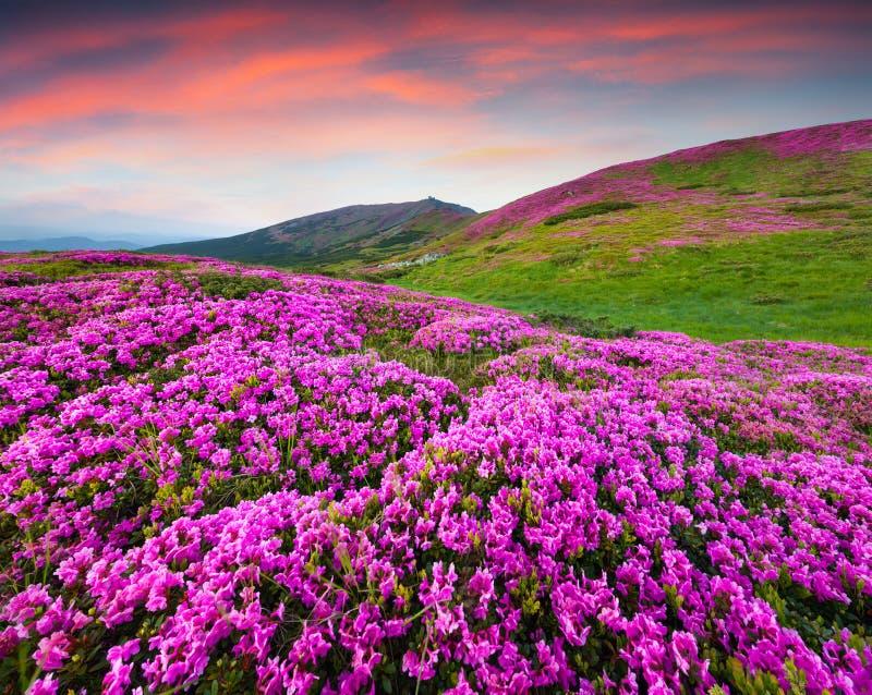 Kleurrijke de zomerscène in de bergen royalty-vrije stock afbeeldingen