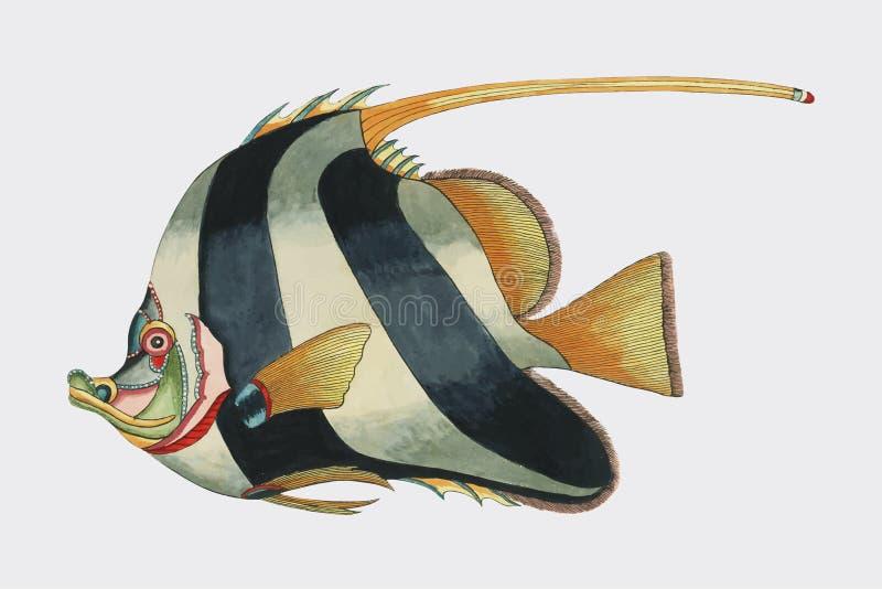 Kleurrijke die en surreal illustraties van vissen in Moluccas Indonesië en Oost-Brits-Indië door Louis Renard 1678 -1746 van H wo vector illustratie