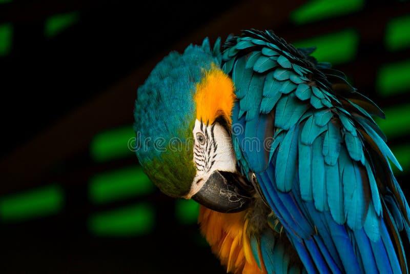 Kleurrijke die Papegaai bij de Dierentuin wordt neergestreken royalty-vrije stock foto