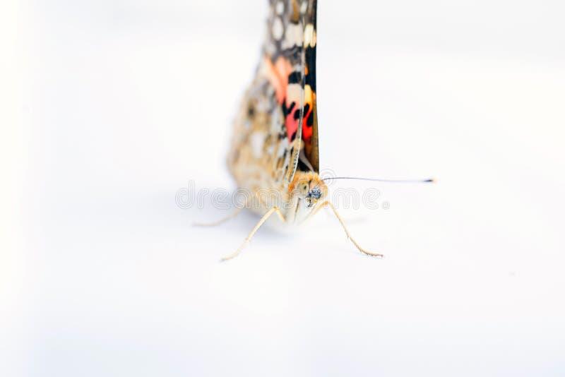 Kleurrijke die vlinder op een witte achtergrond wordt geïsoleerd Exemplaarruimten stock foto's