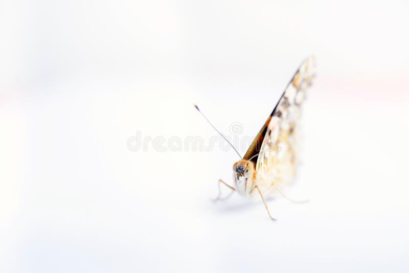 Kleurrijke die vlinder op een witte achtergrond wordt geïsoleerd Exemplaarruimten stock afbeeldingen