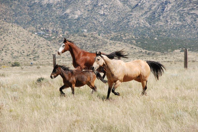 Kleurrijke Drie Paarden die samen in Bergen lopen stock afbeeldingen