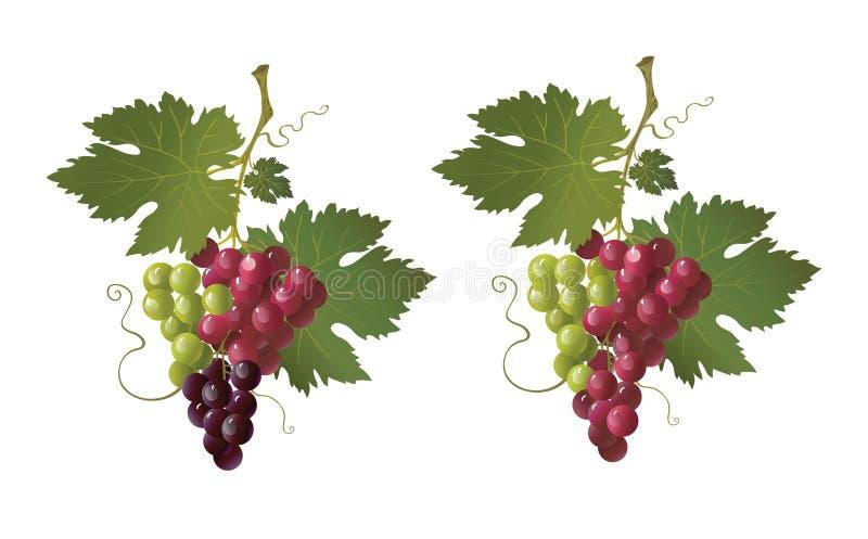 Kleurrijke druif vector illustratie