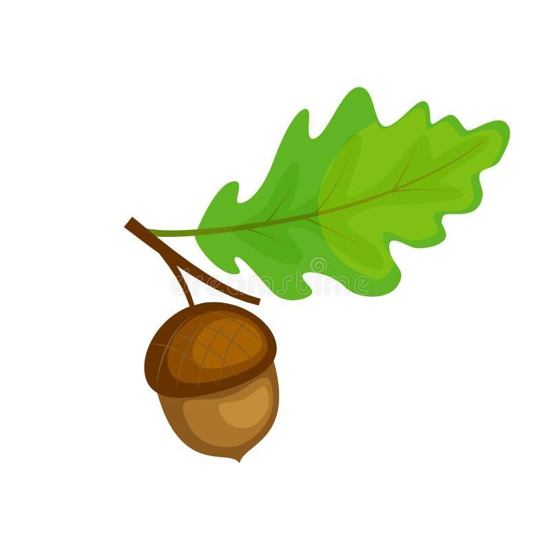 Kleurrijke eiken brunch met blad en eikel Vectorillustratioisol royalty-vrije illustratie