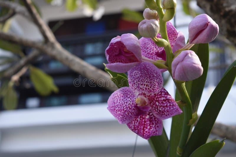 Kleurrijke en elegante orchideebloem stock foto