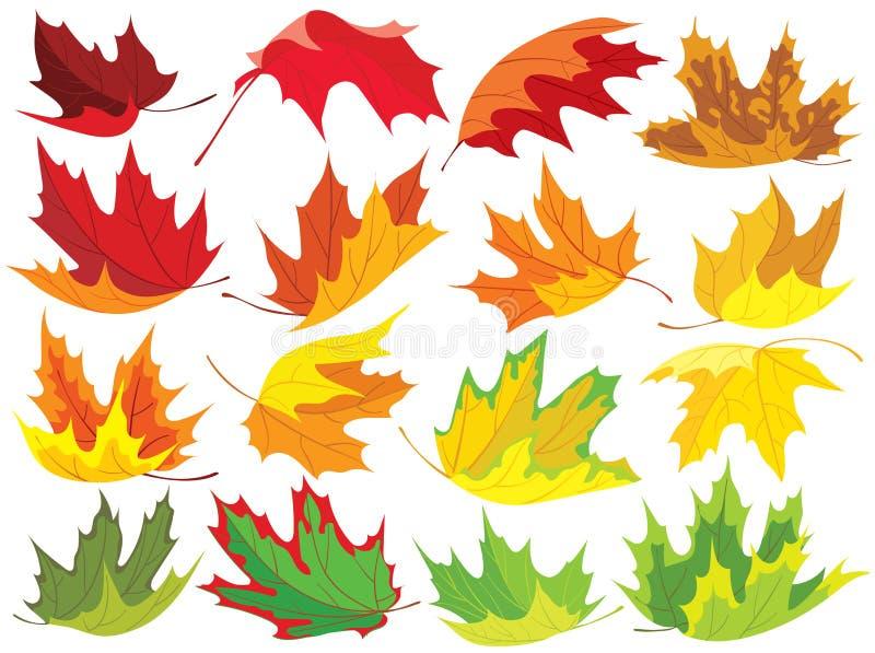 Kleurrijke esdoornbladeren royalty-vrije illustratie