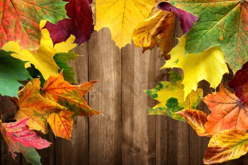 Kleurrijke esdoornbladeren en houten achtergrond royalty-vrije stock afbeelding