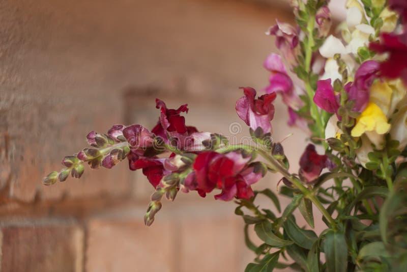 Kleurrijke gebiedsbloemen met groene bladeren royalty-vrije stock foto's