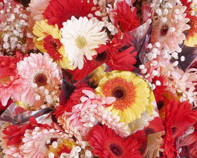 Kleurrijke Gerber-bloemen hoogste mening, natuurlijke achtergrond royalty-vrije stock foto's
