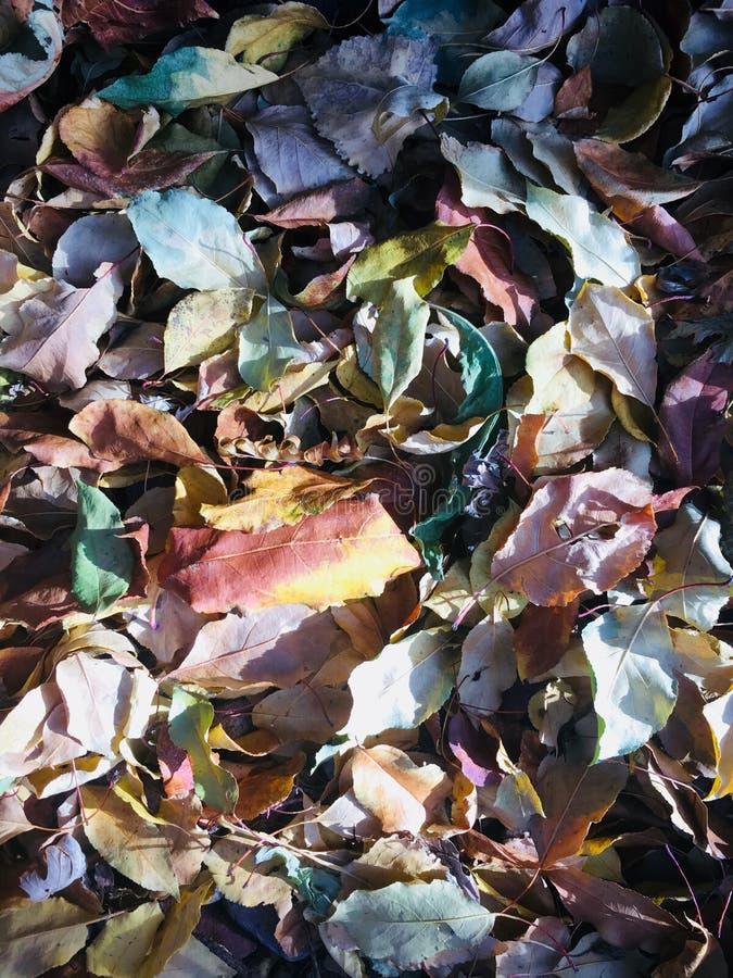 Kleurrijke gevallen bladeren royalty-vrije stock fotografie