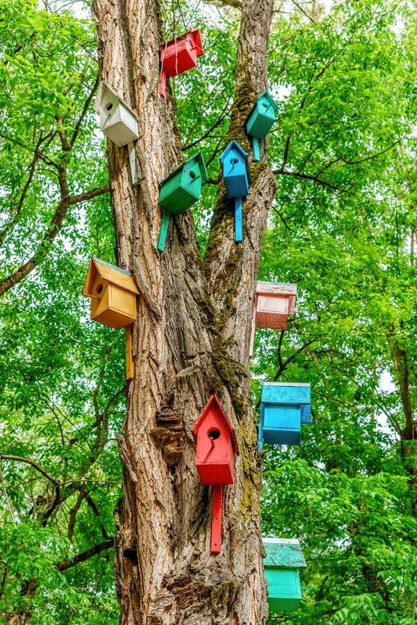 Kleurrijke geverfte houten nestvogeldozen op boomboomstam in de zomerpark Openlucht creatieve kunstdecoratie en zorg voor vogels royalty-vrije stock fotografie
