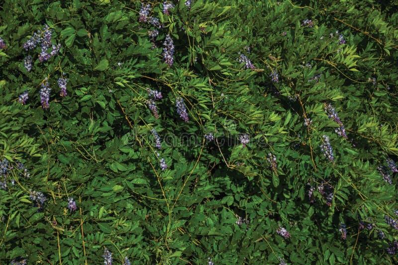 Kleurrijke gevoelige bloemen in een struik stock foto
