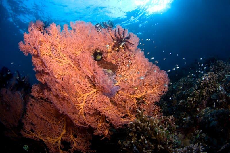 Kleurrijke gorgone met zachte koraal en school van vissen. stock fotografie