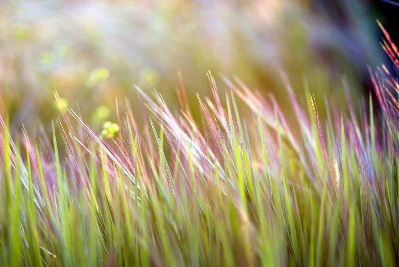 Kleurrijke grasachtergrond royalty-vrije stock afbeeldingen