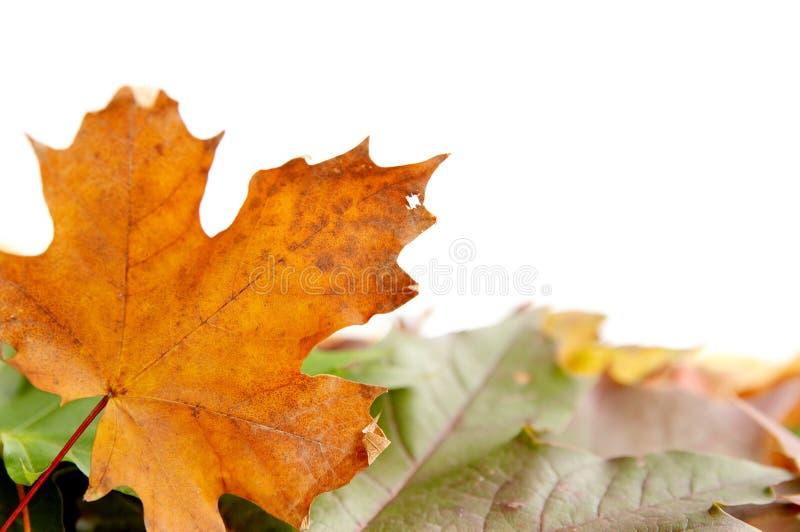 Kleurrijke herfstbladeren stock afbeelding