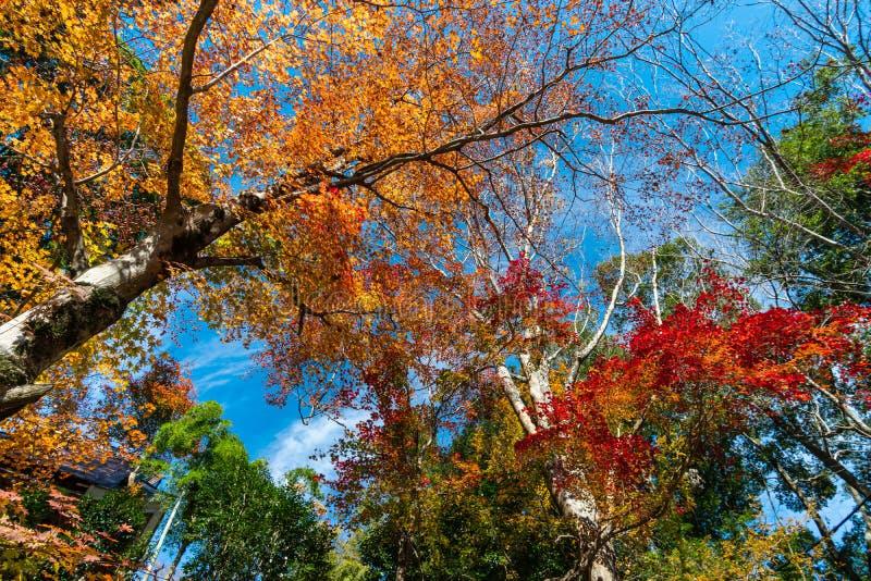 Kleurrijke herfstboom met blauwe lucht royalty-vrije stock afbeeldingen