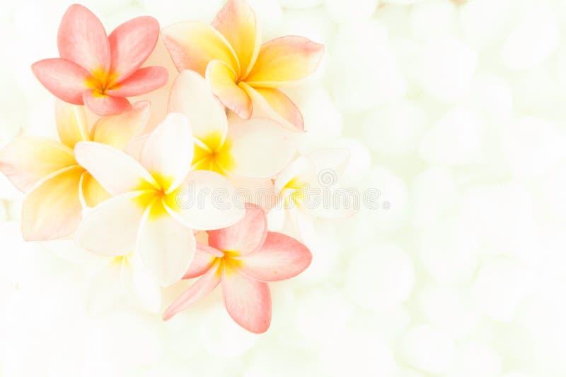 Kleurrijke het behangtextuur van de Plumeriabloem stock afbeeldingen