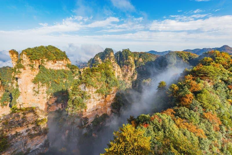 Kleurrijke klippen in Zhangjiajie Forest Park in zonnige mistige ochtendtijd stock afbeelding