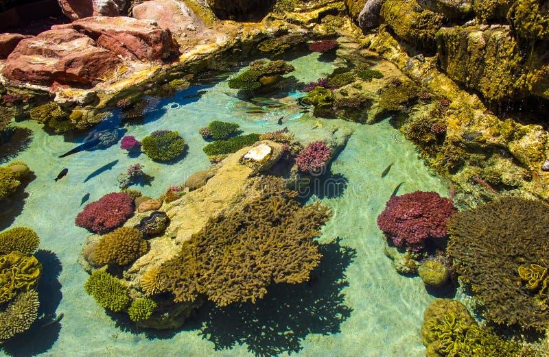 Kleurrijke koraalriffen en de schoonheid van de onderwaterwereld Eilat, Israël stock foto
