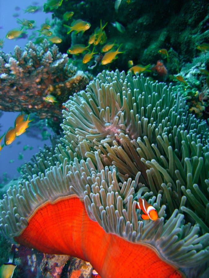 Kleurrijke koraalrifvissen royalty-vrije stock foto
