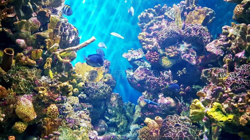 Kleurrijke koralen royalty-vrije stock afbeeldingen