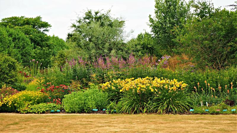 Kleurrijke kruidachtige grens in een tuin stock foto's