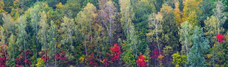 Kleurrijke lange grote het panoramaachtergrond van het de herfst bosgebladerte royalty-vrije stock afbeelding