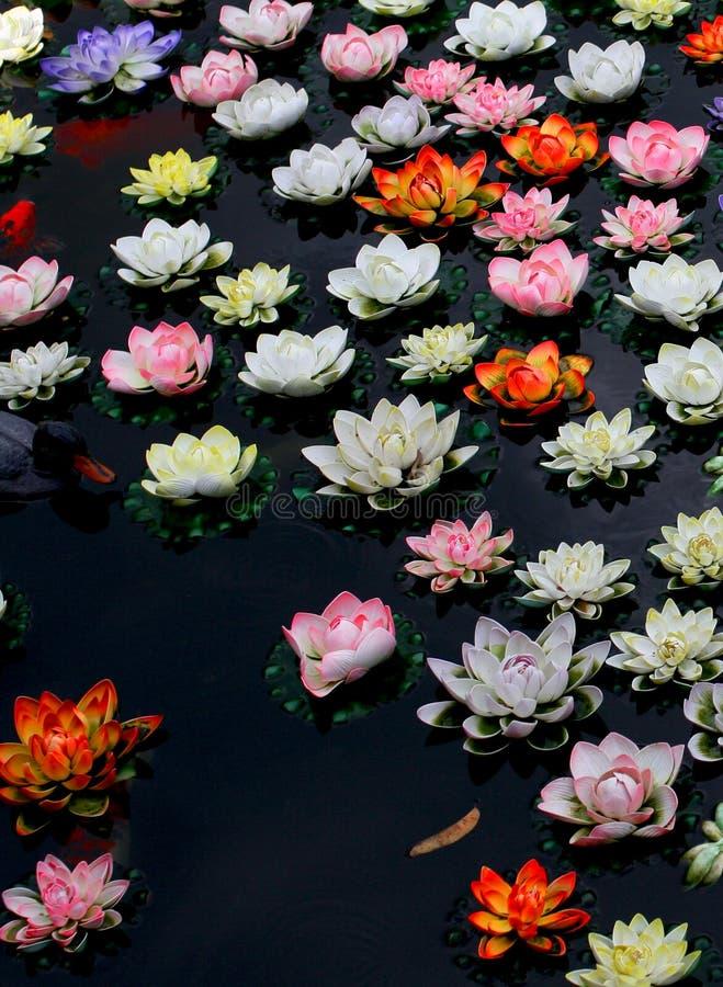 Kleurrijke lotusbloembloem in rivier royalty-vrije stock afbeeldingen