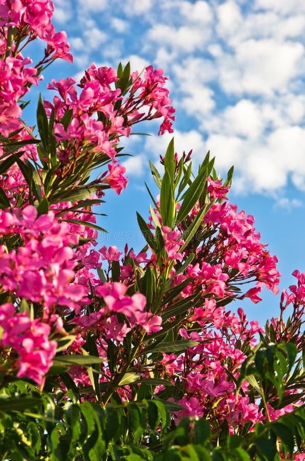 Kleurrijke mediterrane bloemen bij zonnige ochtend royalty-vrije stock fotografie