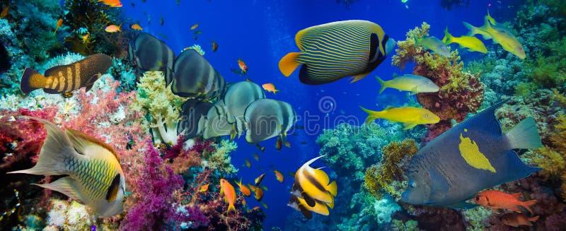 Kleurrijke onderwaterertsader met koraal en sponsen stock foto's