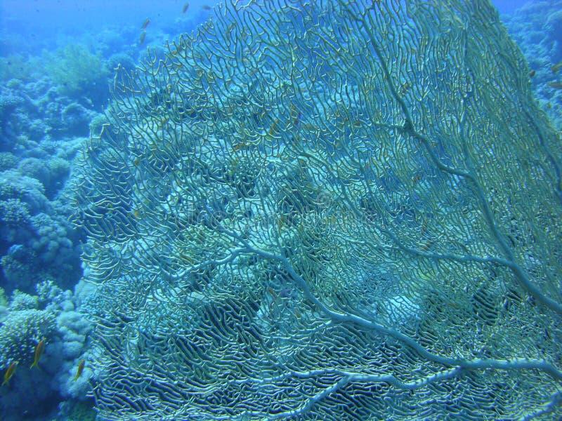 Kleurrijke onderwaterwereld van het Rode overzees royalty-vrije stock afbeeldingen