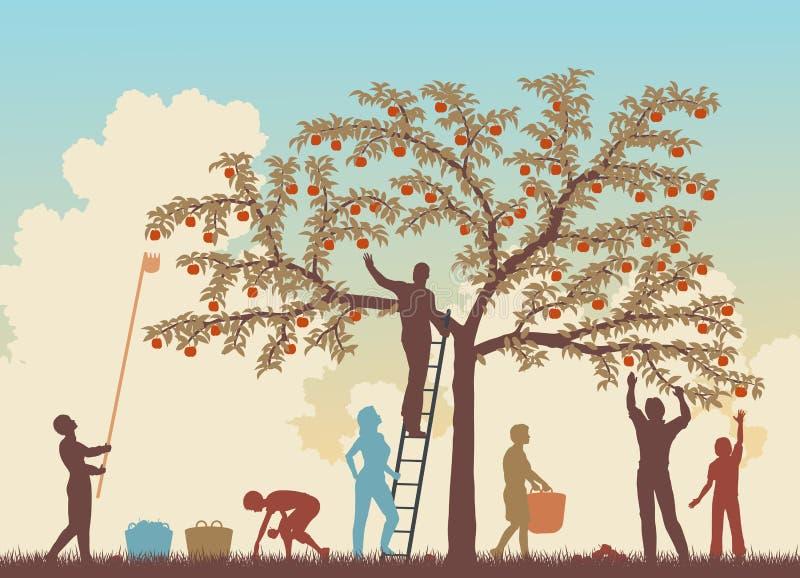 Kleurrijke oogst royalty-vrije illustratie