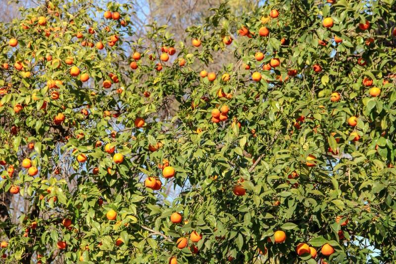 Kleurrijke oranje boom en palmen royalty-vrije stock afbeeldingen