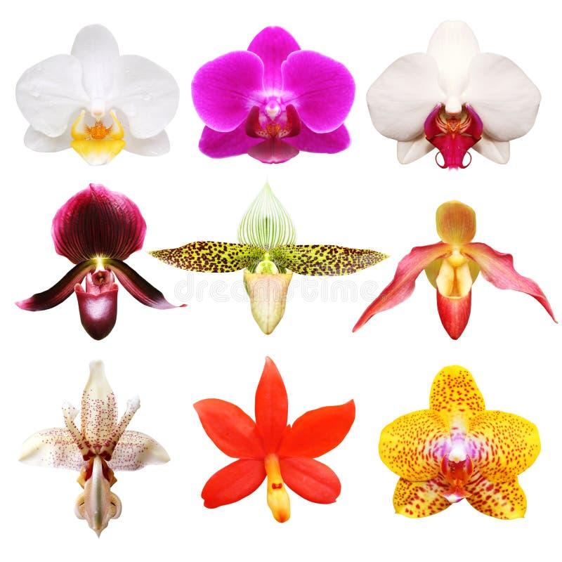 Kleurrijke orchideeinzameling stock foto