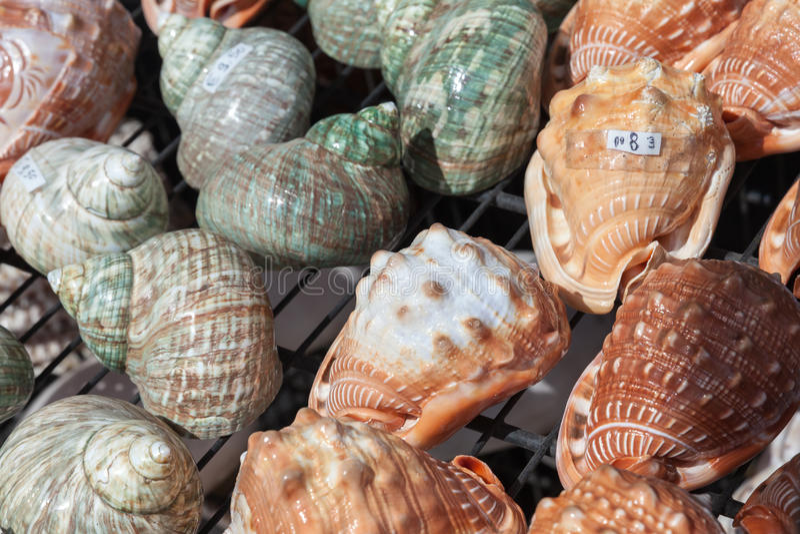 Kleurrijke overzeese shells als herinneringen stock foto