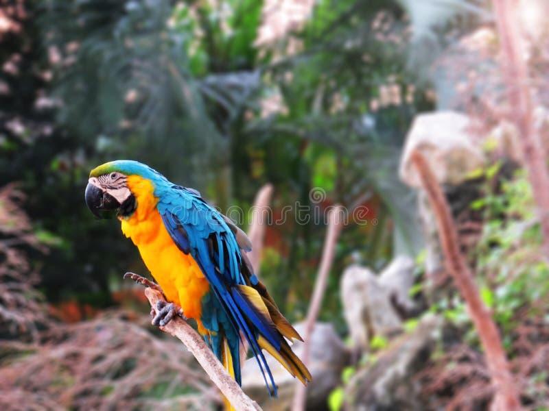 Kleurrijke papegaai royalty-vrije stock fotografie