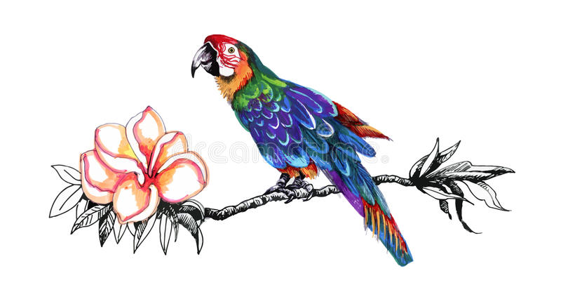 Kleurrijke papegaai op takje stock illustratie